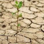 Des pluies nécessaires pour éloigner le spectre de la sécheresse